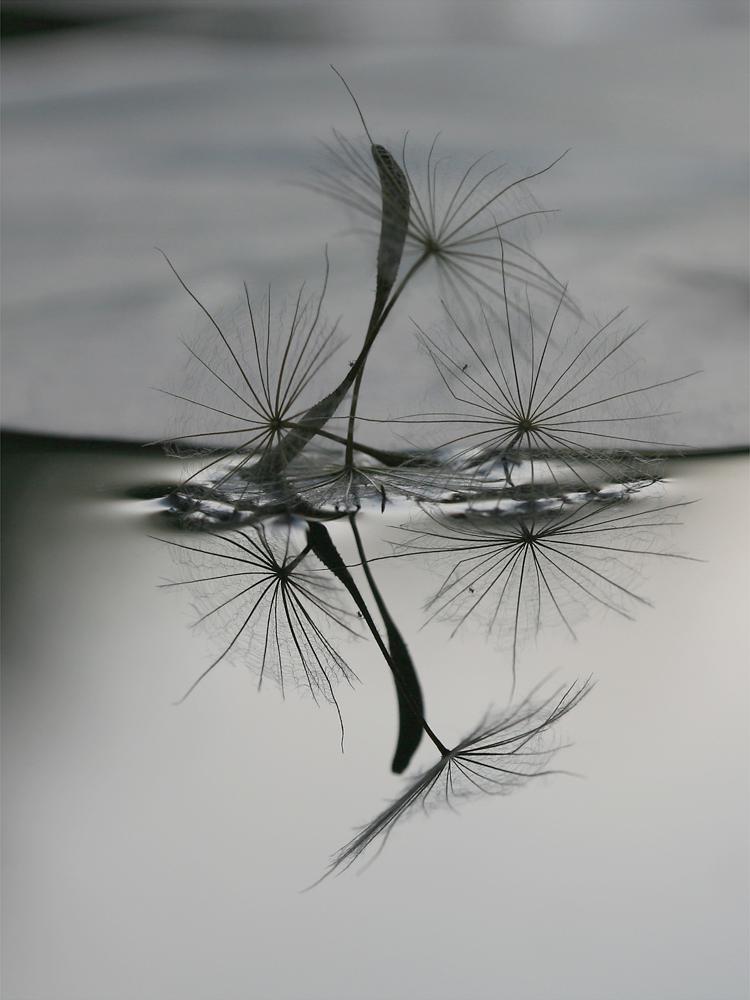 ...Schirmchen im Wasser