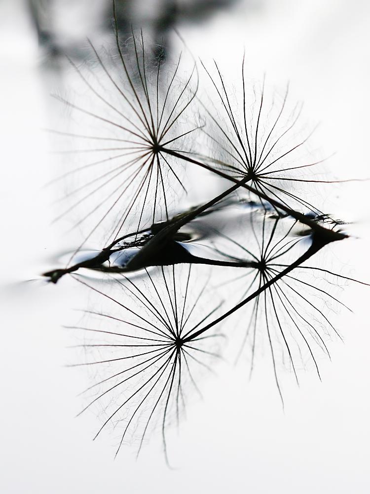 Schirmchen im Wasser III