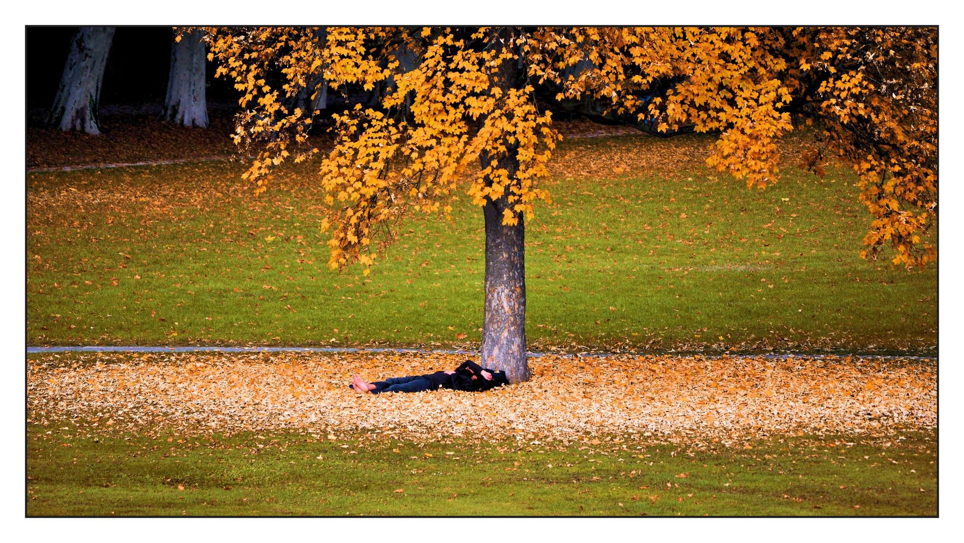 Schläfchen im Herbst