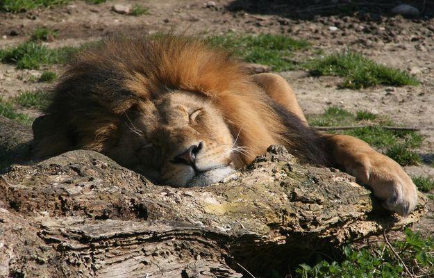 Schlaf des Gerechten
