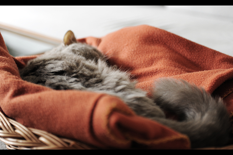 schlaf gut, alter Kumpel
