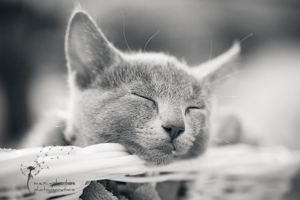 schlaf gut kleine maus foto bild tiere haustiere katzen bilder auf fotocommunity. Black Bedroom Furniture Sets. Home Design Ideas