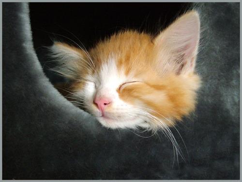 schlaf gut und tr um was sch nes foto bild tiere haustiere katzen bilder auf. Black Bedroom Furniture Sets. Home Design Ideas