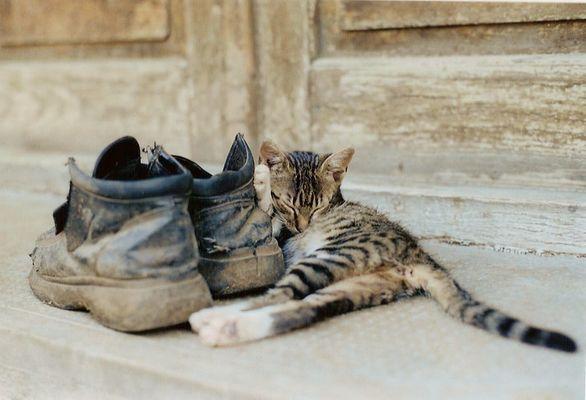 Schlaf Kätzchen, schlaf!