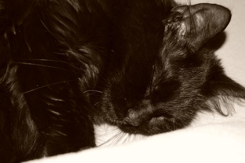 Schlaf Mausi, Schlaf...