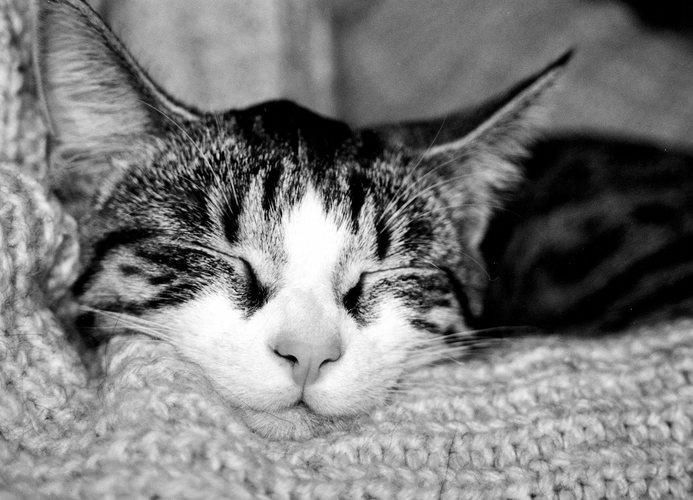 Schlaf Momo schlaf