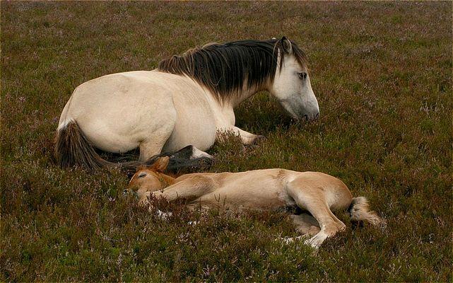 Schlaf, Pferdchen, schlaf ...