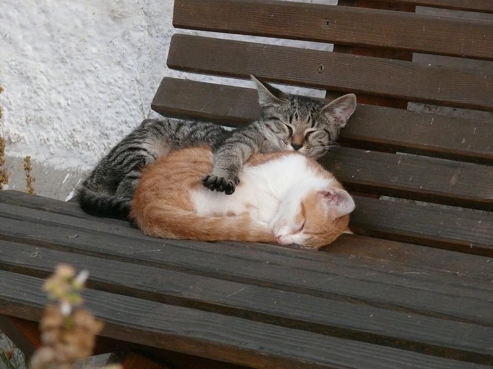 schlaf sch n foto bild natur katzen tiere bilder auf fotocommunity. Black Bedroom Furniture Sets. Home Design Ideas