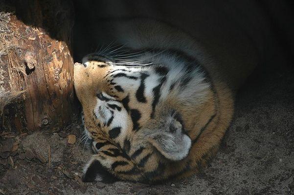 Schlaf schön.....