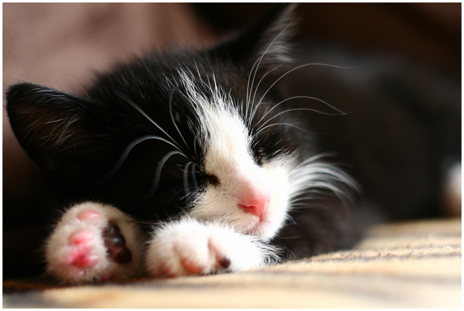 *°*Schlaf schön, kleiner Brösel*°*