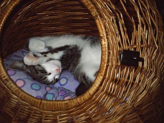 Schlafanfall im Katzenkorb