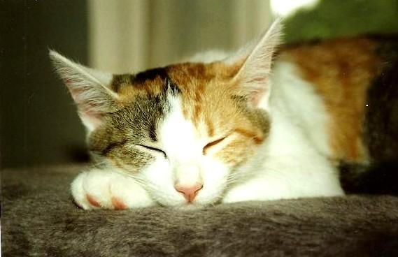 schlafe in himmlischer ruh