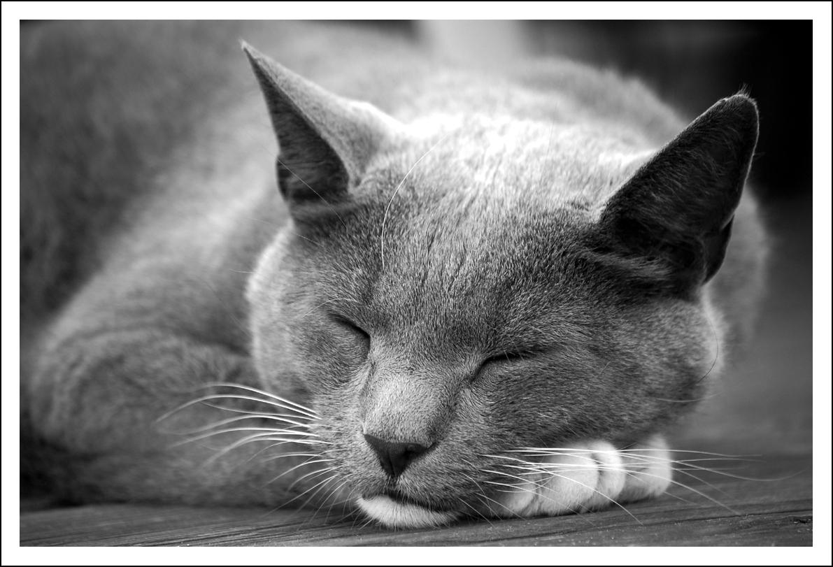 Schlafen geht immer