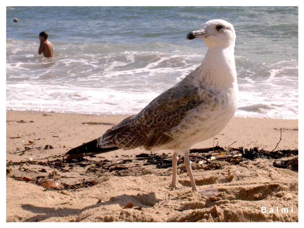 """""""Schlafen"""" geht nicht; was am Strand so alles """"herumstolziert""""... (...tagsüber...)"""