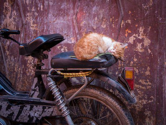 Schlafen im Getriebe des Basars