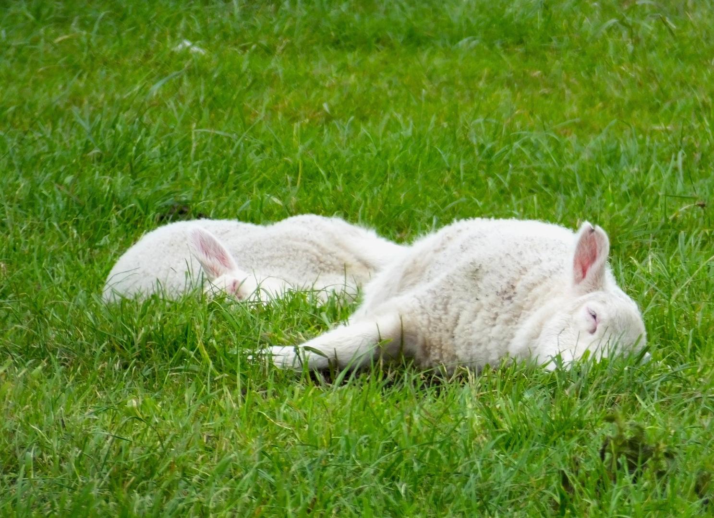 Schlafen ist das Allerbest