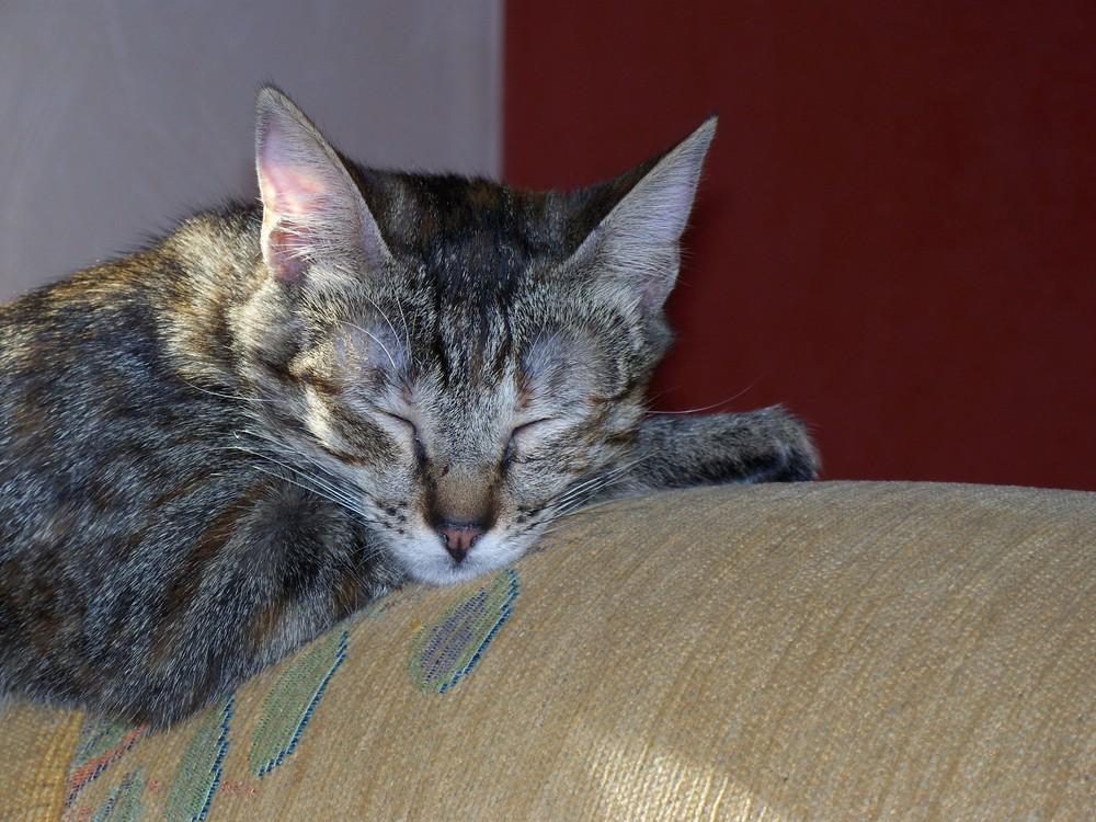 Schlafen ist wichtig