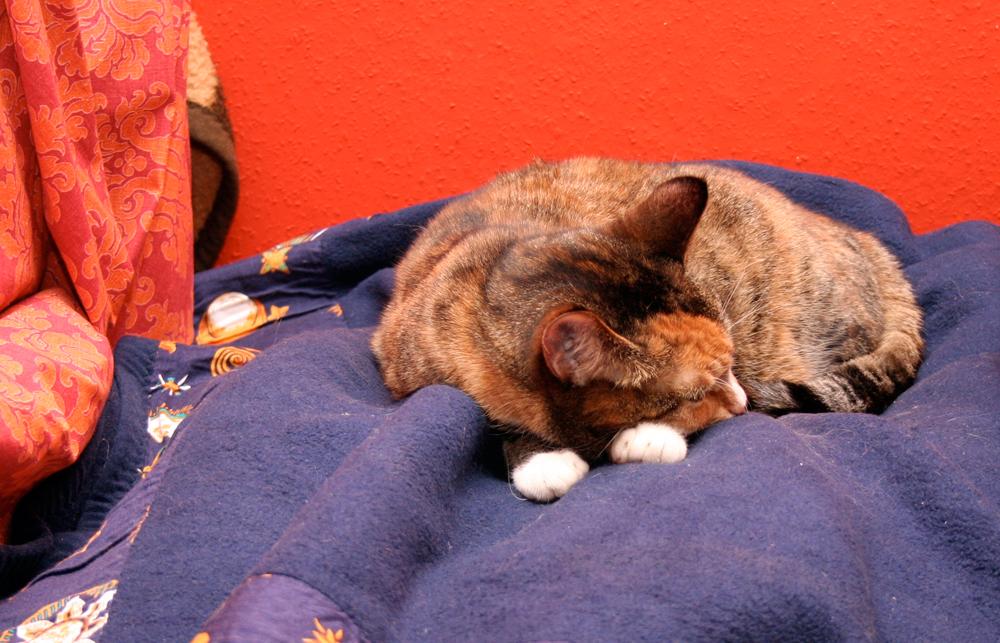 Schlafen kann Katz überall