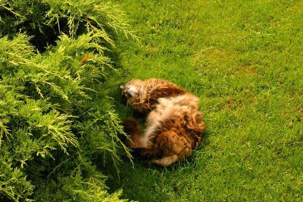 Schlafend in der Wiesse