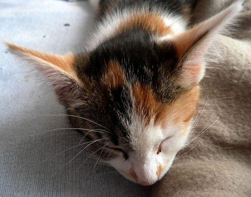 Schlafende Fledermaus ;)