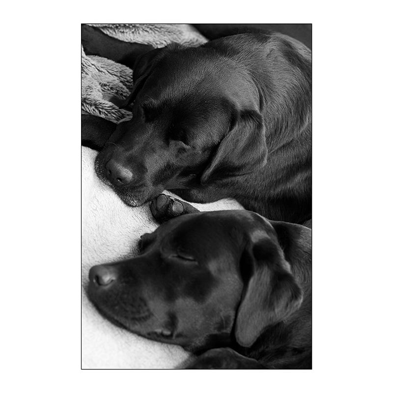 schlafende Hunde...