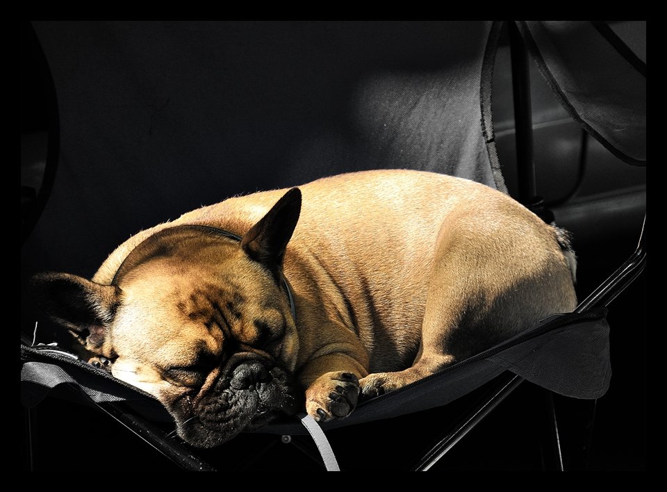 Schlafende Hunde sollte man nicht wecken...