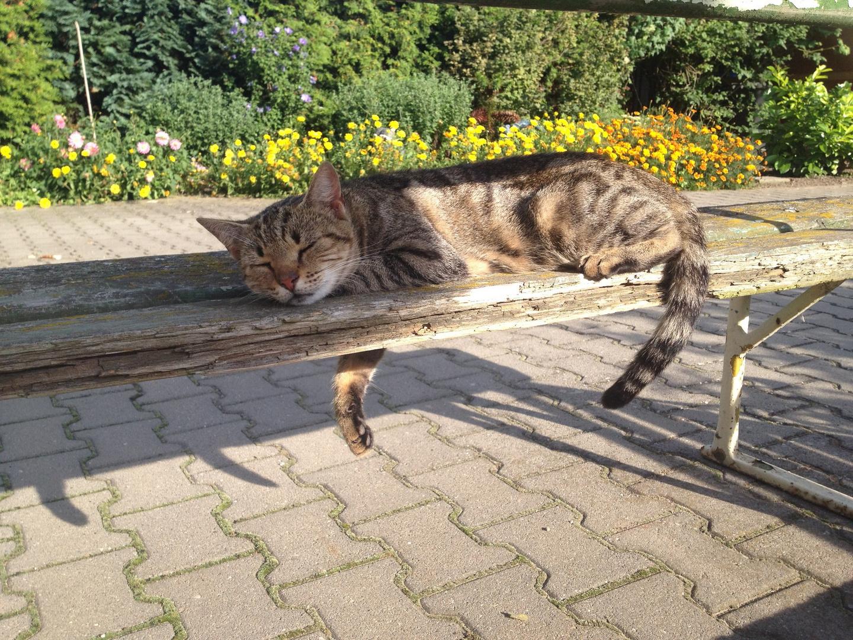 schlafende Katze auf einer Bank