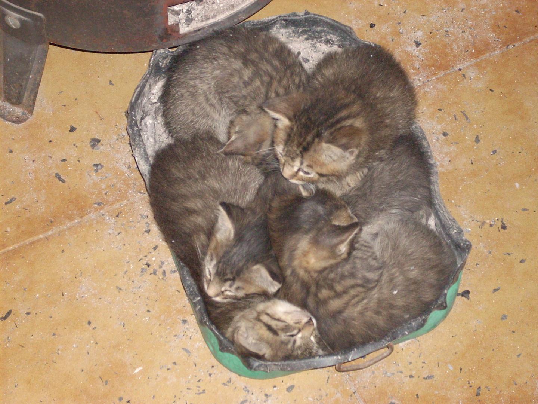 schlafende katzen