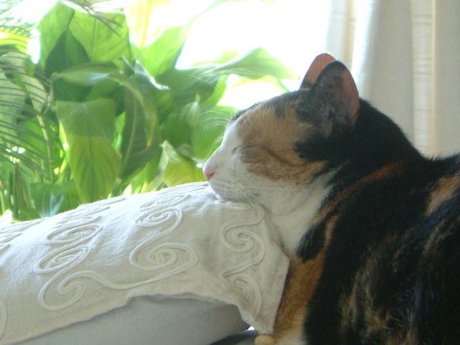 Schlafende Momo...