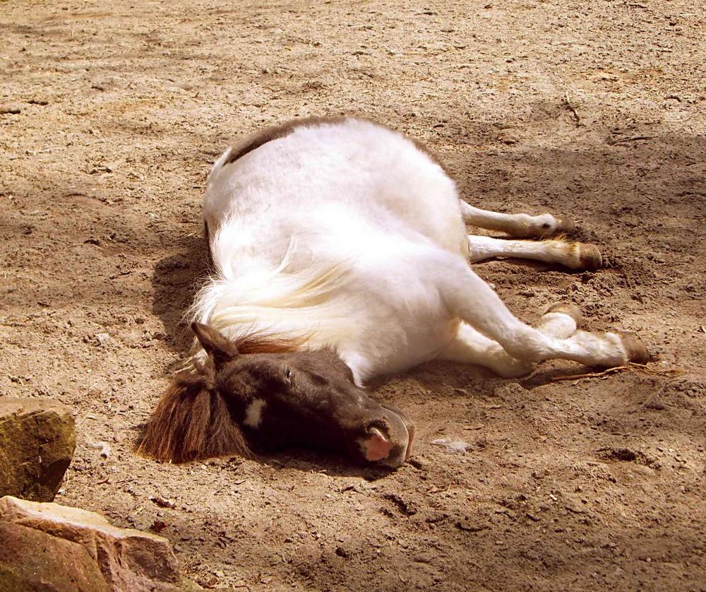 ... schlafende Pferde soll man nicht wecken, oder?