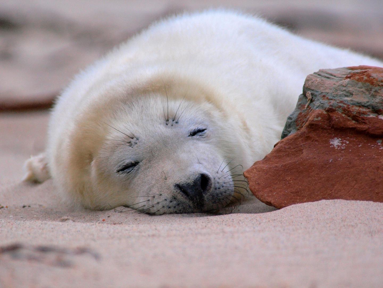 *schlafende Robbe*
