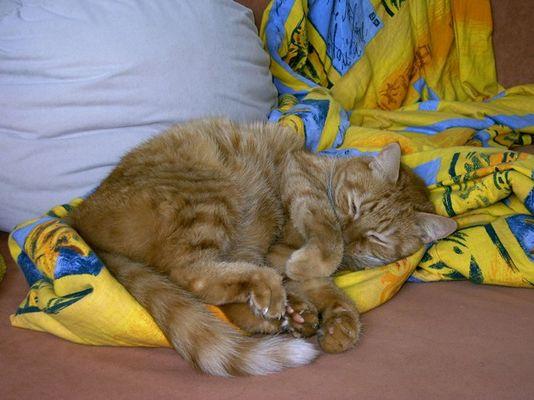 schlafender Haustiger