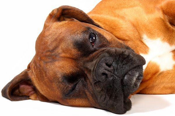 schlafender Wachhund