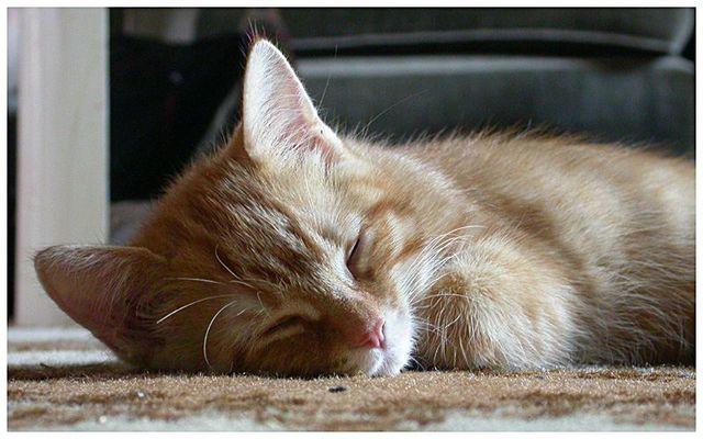 Schlafendes Raubtier
