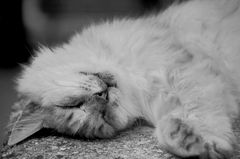 schlafkatze