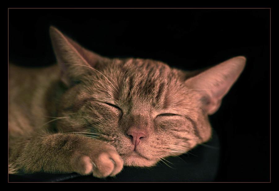 Schlafmuetze