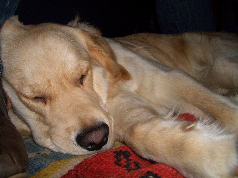 Schlafmütze Huddy
