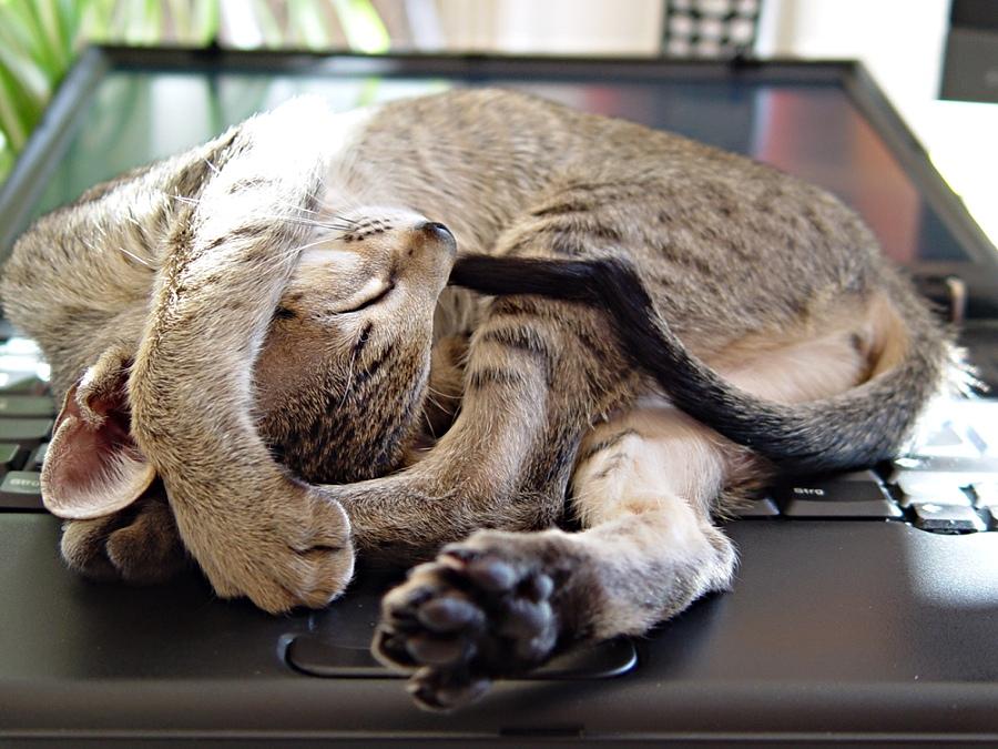 schlafplatz auf dem notebook foto bild tiere haustiere katzen bilder auf fotocommunity. Black Bedroom Furniture Sets. Home Design Ideas