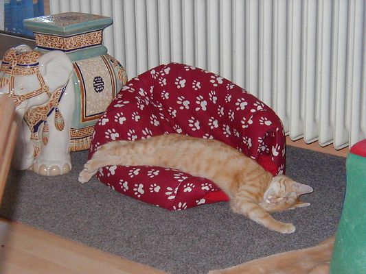 Schlafplatz zu klein