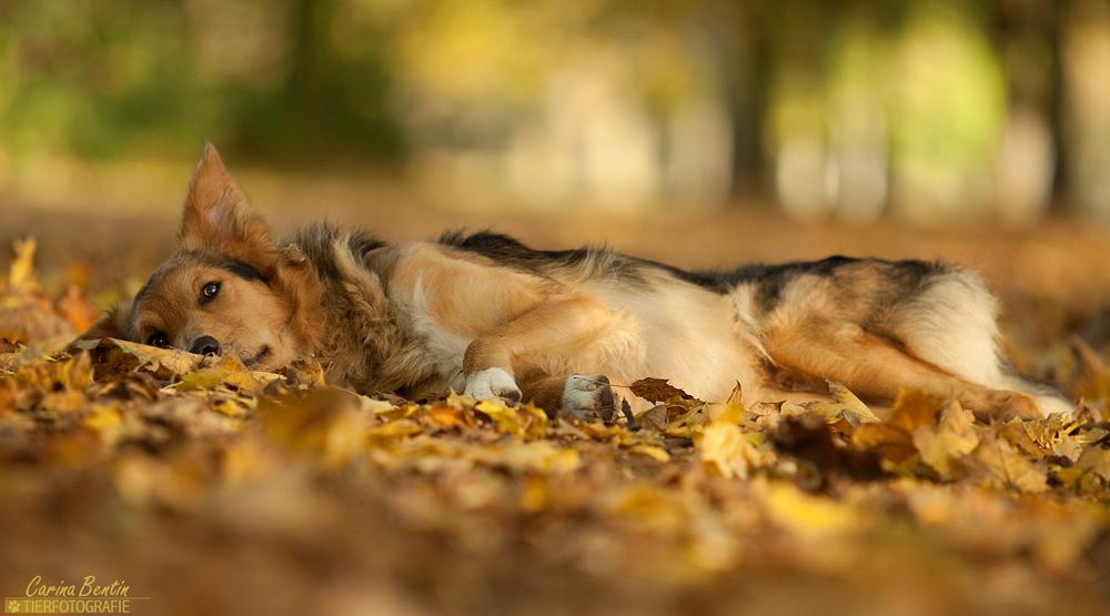 schlaft gut