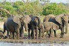 Schlammdusche am Chobe