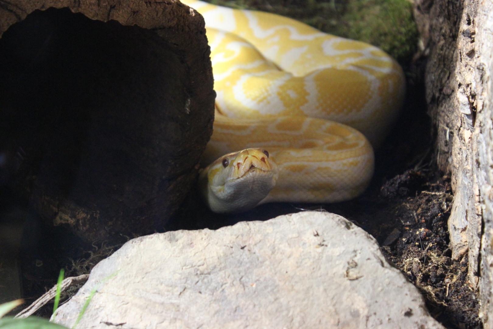 Schlange im Zoo in Neunkirchen
