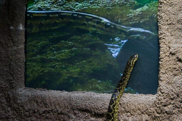 Schlangen TV