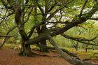 Schlangenbaum