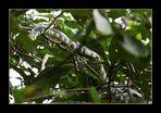 Schlangenbaum :-)