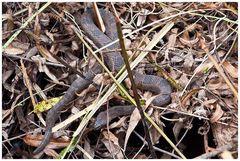 Schlangenfund ...