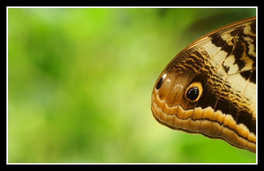 Schlangenkopf ?