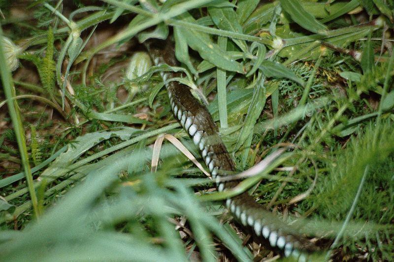 Schlangenlinie