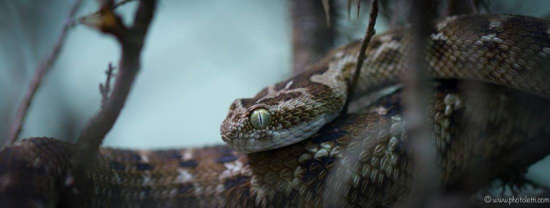 Schlangensafari