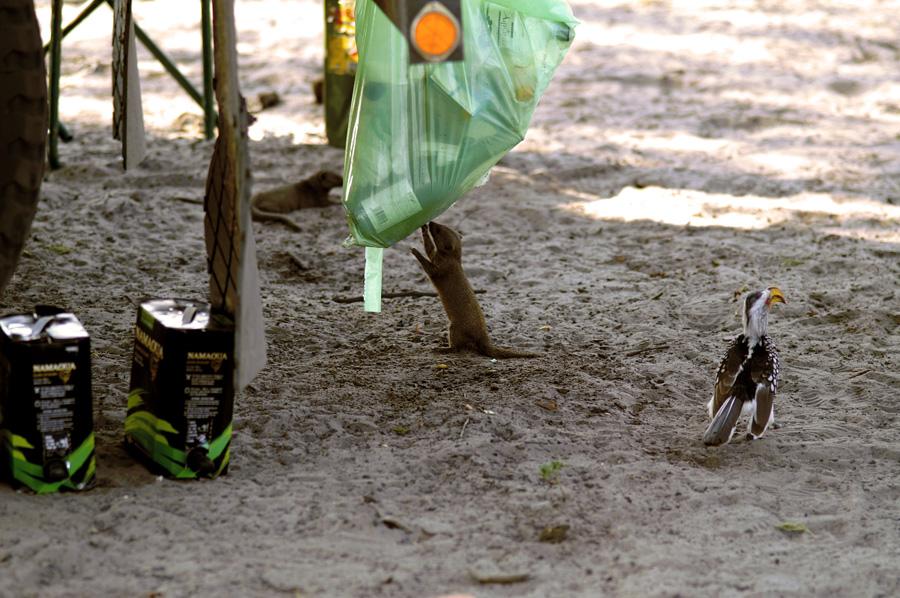 Schlangestehen in Savuti